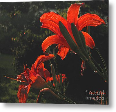 Metal Print featuring the photograph Glowing Day Lilies by Donna Brown
