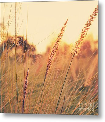 Glowing Fountain Grass - Hipster Photo Square Metal Print by Charmian Vistaunet