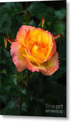 Glowing Rose Metal Print by Edward Sobuta