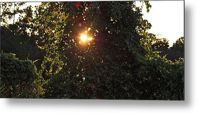 Metal Print featuring the photograph Glowing Tree by Michael Albright