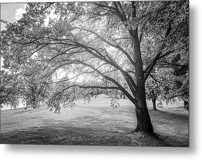 Glowing Tree Metal Print