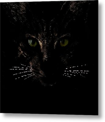 Glowing Whiskers Metal Print by Helga Novelli