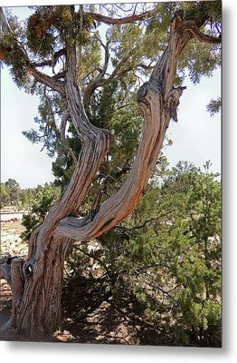 Gnarled Beauty Metal Print by Gordon Beck