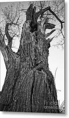 Gnarly Old Tree Metal Print