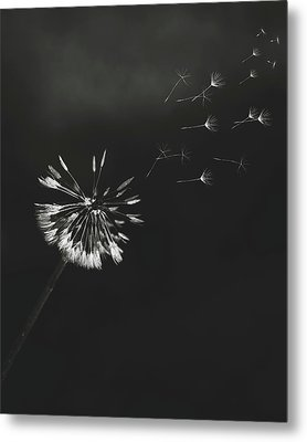 Metal Print featuring the photograph Go Forth Bw by Heather Applegate