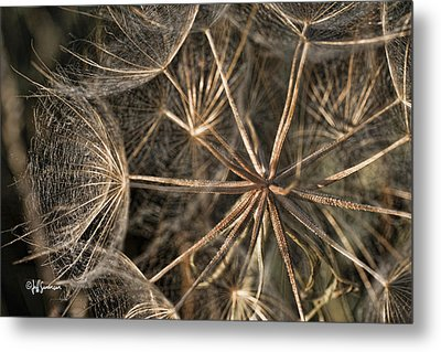 Goats Beard At Sunset Metal Print