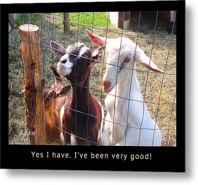 Metal Print featuring the photograph Goats Poster by Felipe Adan Lerma