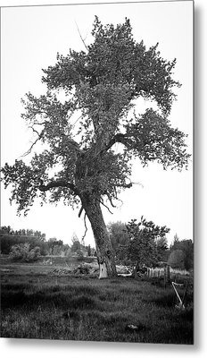 Goddess Tree 2 Metal Print by Matthew Angelo