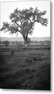 Goddess Tree Metal Print by Matthew Angelo