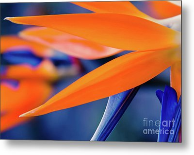 Metal Print featuring the photograph Gods Garden by Sharon Mau