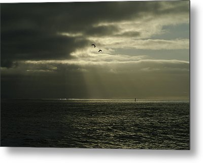 God's Gulls Metal Print by Michael Courtney