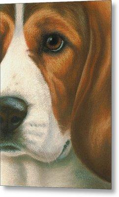 Goggie Beagle Metal Print by Karen Coombes