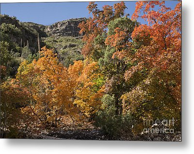 Metal Print featuring the photograph Gold In The Mountains by Melany Sarafis