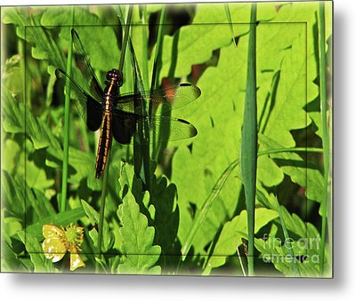 Metal Print featuring the photograph Gold Striped Dragron by Deborah Johnson