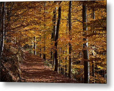 Golden Autumn Metal Print by Andreas Levi