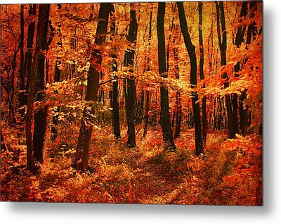 Golden Autumn Forest Metal Print by Gabriella Weninger - David