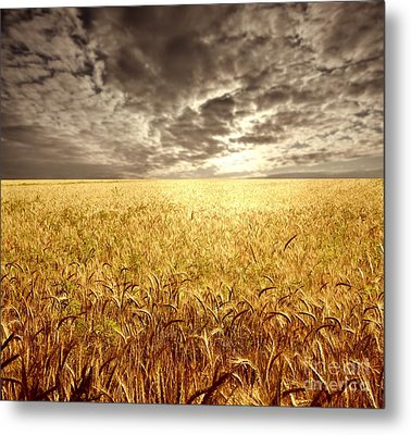 Golden Beautiful Wheat Farm Metal Print by Boon Mee