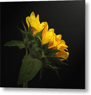 Metal Print featuring the photograph Golden Beauty by Judy Vincent