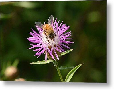 Golden Boy-bee At Work Metal Print