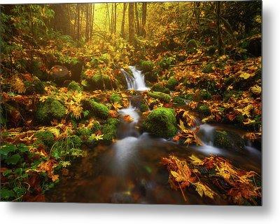 Golden Creek Cascade Metal Print by Darren White