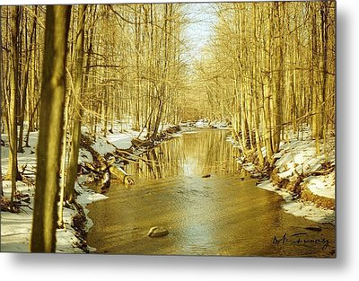 Metal Print featuring the photograph Golden Early Spring In Ontario by Maciek Froncisz