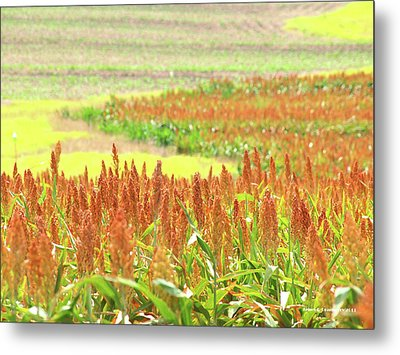 Golden Field In Dry Brush Metal Print by James Granberry