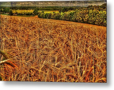 Golden Field In Normandy Metal Print
