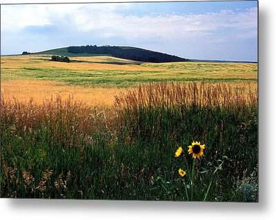 Golden Fields Forever Metal Print by Kathy Yates