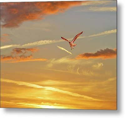 Golden Flight Metal Print by Adele Moscaritolo