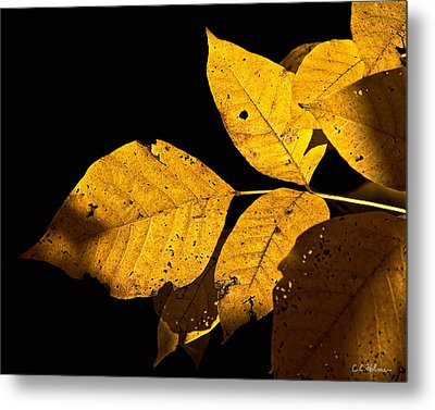 Golden Glow Metal Print by Christopher Holmes