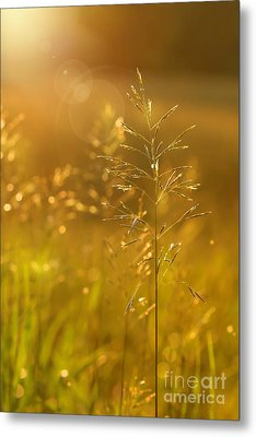 Golden Glow Metal Print by Sandra Cunningham