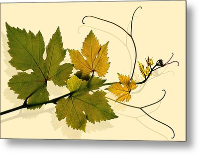 Golden Grape Vine Metal Print by Marsha Tudor