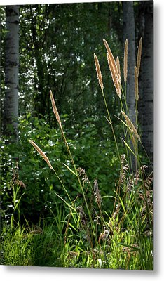 Golden Grass At The Forest Edge Metal Print