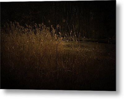 Metal Print featuring the photograph Golden Grass by Ryan Photography