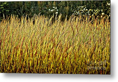 Golden Grasses Metal Print by Meirion Matthias