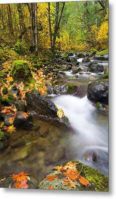 Golden Grove Metal Print by Mike  Dawson