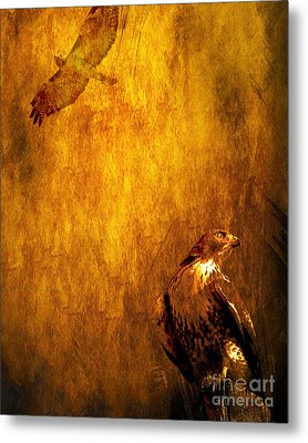 Golden Hawk 4 Metal Print by Wingsdomain Art and Photography