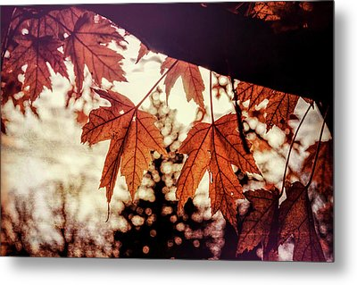 Golden Hour Metal Print by Annette Berglund