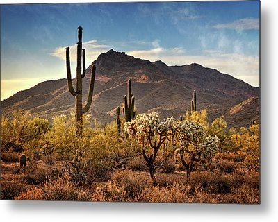 Metal Print featuring the photograph Golden Hour On Usery Mountain  by Saija Lehtonen