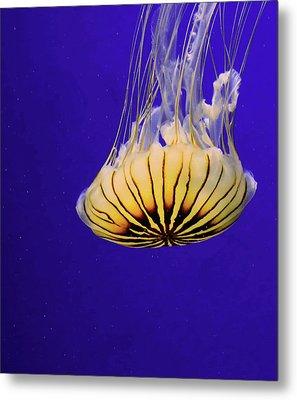 Golden Jellyfish Metal Print by Rosalie Scanlon