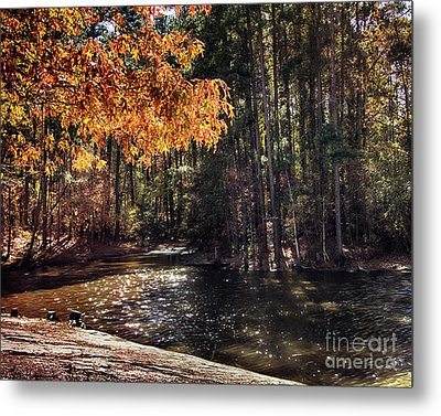 Golden Leaves At Dupree Park Metal Print by Tom Gari Gallery-Three-Photography