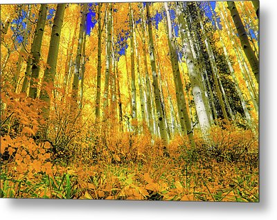 Metal Print featuring the photograph Golden Light Of The Aspens - Colorful Colorado - Aspen Trees by Jason Politte