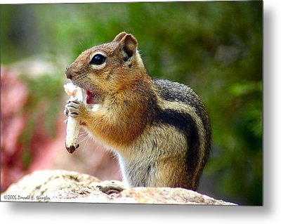 Metal Print featuring the photograph Golden-mantled Ground Squirrel by Perspective Imagery