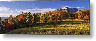 Golden Meadow Metal Print