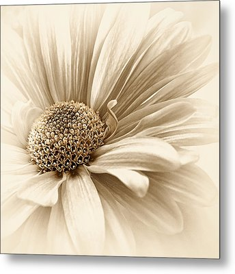 Golden Mist Metal Print