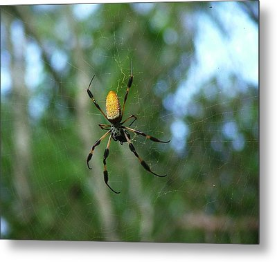 Golden Orb Weaver 1 Metal Print