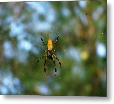 Golden Orb Weaver 2 Metal Print