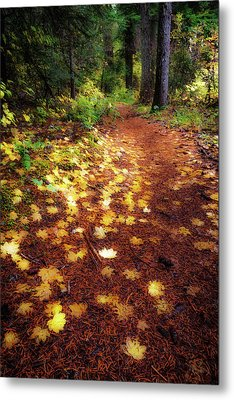 Metal Print featuring the photograph Golden Path by Cat Connor