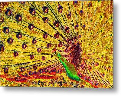 Golden Peacock Metal Print by David Lee Thompson