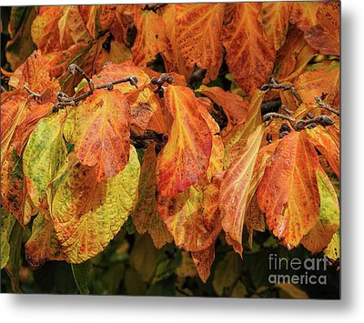 Metal Print featuring the photograph Golden by Peggy Hughes